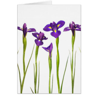 Purple irises isolated on a white background greeting card
