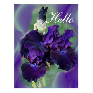 Purple Irises-lvsg Postcard