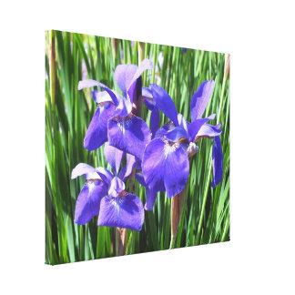 Purple Irises On Canvas
