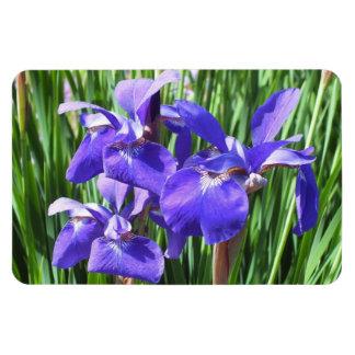 Purple Irises Photo Magnet