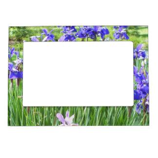 Purple Irises Photo Magnet Magnetic Picture Frames