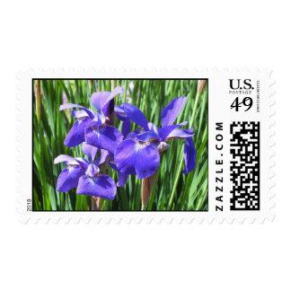 Purple Irises Postage Stamps