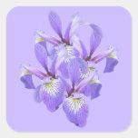 Purple Irises Touch of Spring Square Sticker