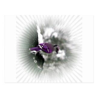 Purple Jay Bird Post Card
