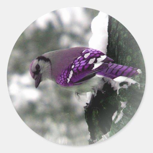 Purple Jay Bird Stickers Zazzle