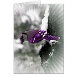 Purple Jay Greeting Cards
