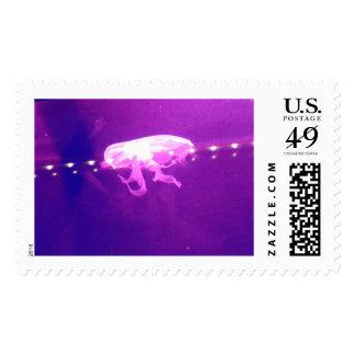 Purple Jellyfish Photos Stamp