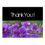 Purple Larkspur Thank You Post Cards