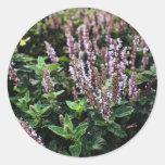 Purple Lavander flowers Classic Round Sticker