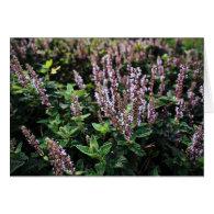 Purple Lavander flowers Greeting Cards