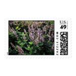 Purple Lavander flowers Stamp