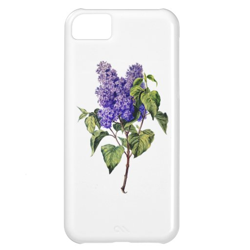 Purple Lavender Drawn From Nature Cover For iPhone 5C
