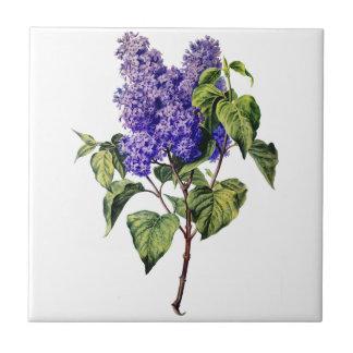 Purple Lavender Drawn From Nature Ceramic Tile