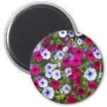 Purple & Lavender Flowers: Fridge Magnet