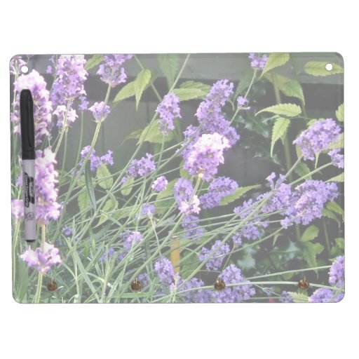 Purple Lavender flowers shining in sun Dry-Erase Boards