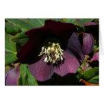 Purple Lenten Rose Easter Flower Card