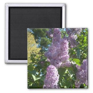 Purple Lilac 2 Magnet
