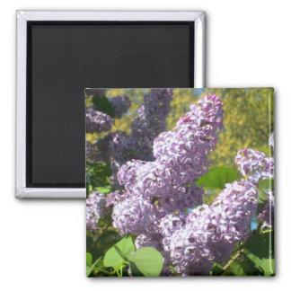 Purple Lilac 4 Magnet