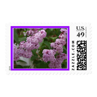 Purple Lilac blooms Postage