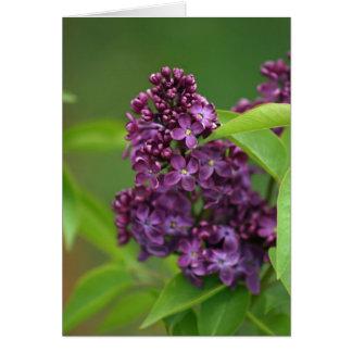 Purple Lilac Card