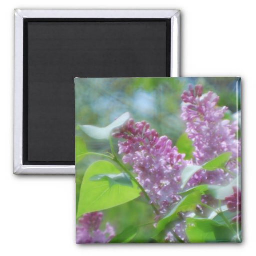 Purple Lilac Flowers Magnet