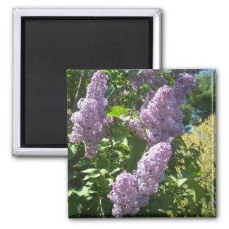 Purple Lilac magnet magnet