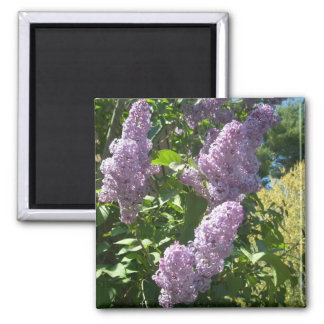 Purple Lilac magnet
