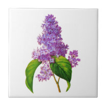 Purple Lilacs by Pierre-Joseph Redoute Tile