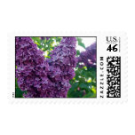 Purple Lilacs Postage Stamps