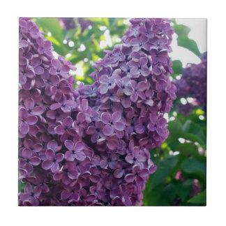 Purple Lilacs  Tile