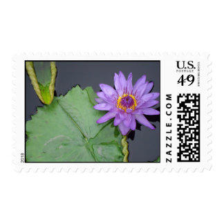 Purple Lilly Pad Stamps