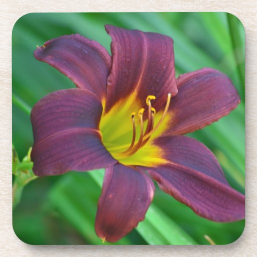 Purple Lily Coasters