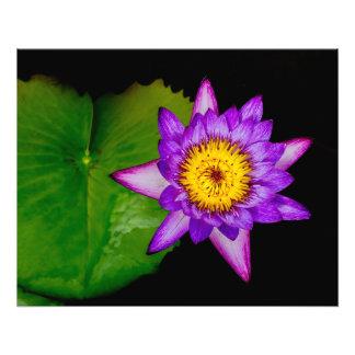Purple Lily Pad Art Photo