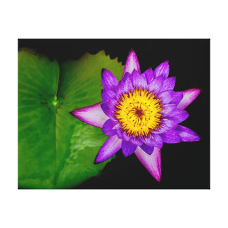 Purple Lily Pad Canvas Print