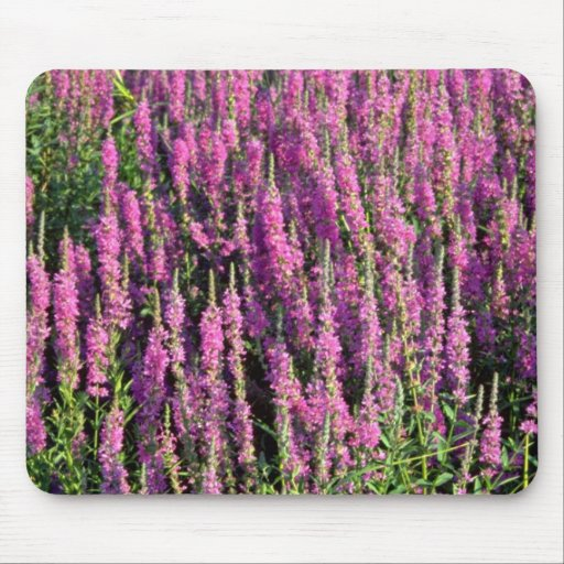 Purple loosestrife flowers mouse pad