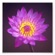 Purple Lotus Flower Photo Print