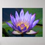 Purple Lotus Print