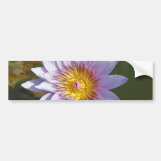 Purple Lotus/Water Lily Car Bumper Sticker