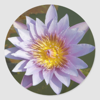 Purple Lotus/Water Lily Classic Round Sticker