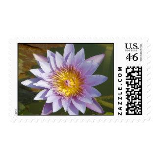 Purple Lotus/Water Lily Postage