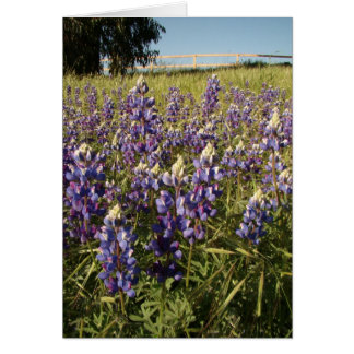 Purple Lupin Flowers Card