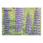 Purple Lupin Pack Of Chubby Business Cards