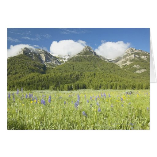 Purple Lupine and Mountains Cards