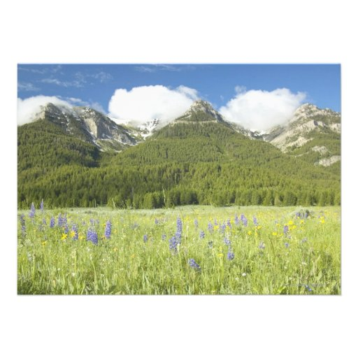 Purple Lupine and Mountains Invitations
