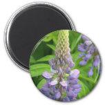 Purple Lupine Flowers Magnet