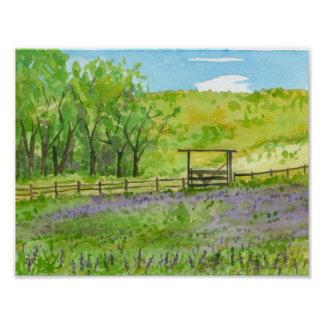 Purple Lupines Field Watercolor Landscape Painting Poster