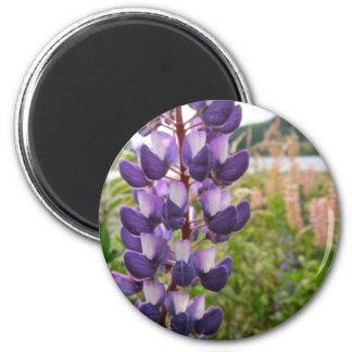 Purple Lupins Magnet