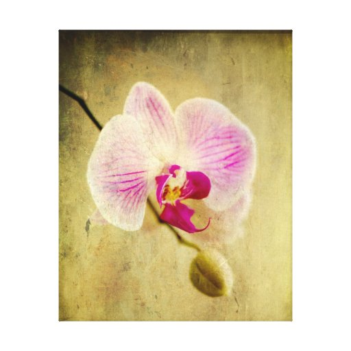 Purple Magenta and White Orchid Floral Flower Aged Stretched Canvas Print
