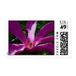Purple Magnolia Blossom Postage Stamp