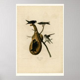 Purple Martin Bird Poster